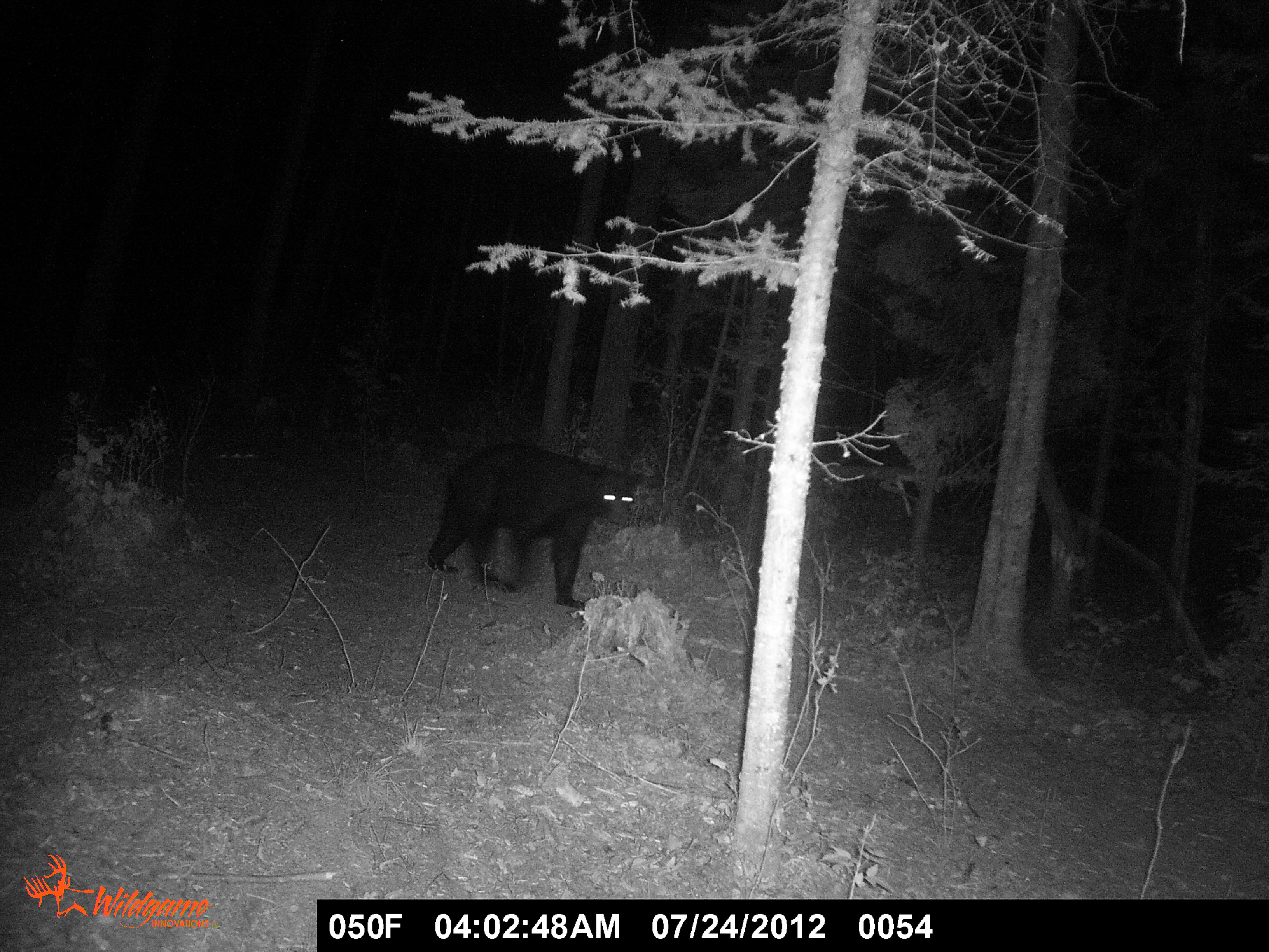 the bear necessities of trail camera use sporting journal radio