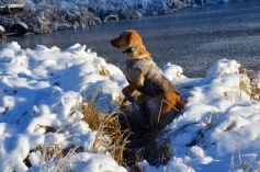 You may not like hunting in the snow, but Mika does!