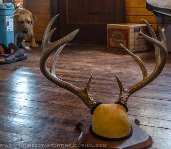 I was very happy with my new antler mount, Mika was not.