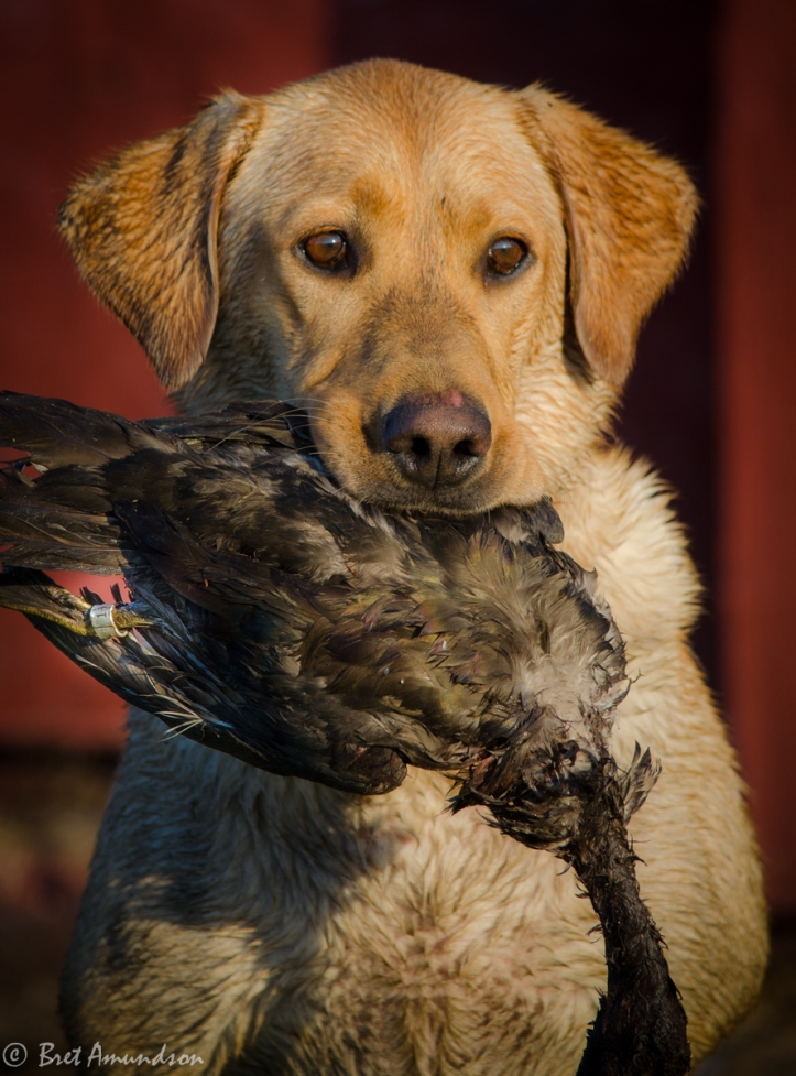 92513 - whc duck hunt_-4