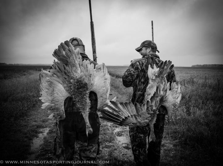 92813 - goose fest cranes-2