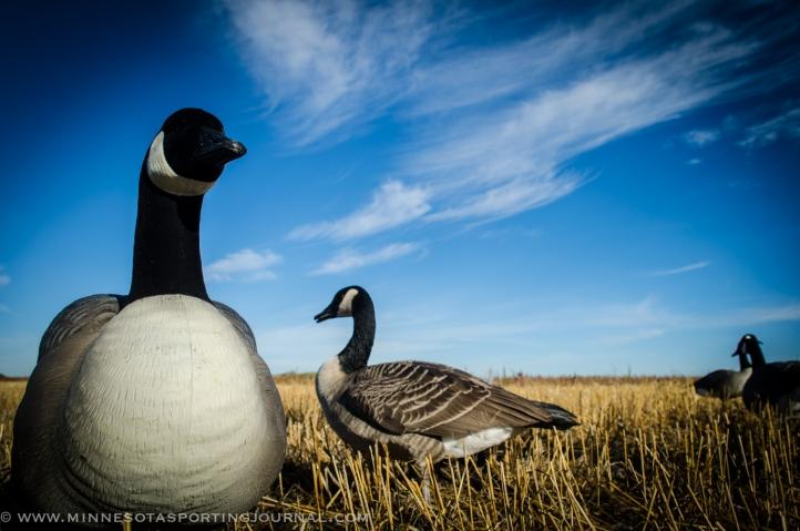 92913 - goose fest geese