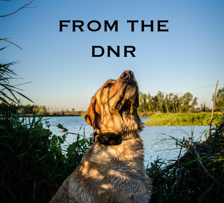 From the DNR2