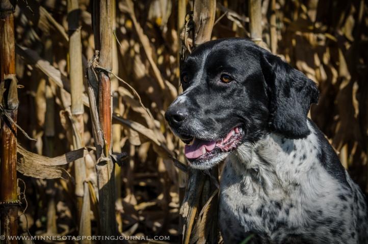 101113 - gov pheasant hunt-5