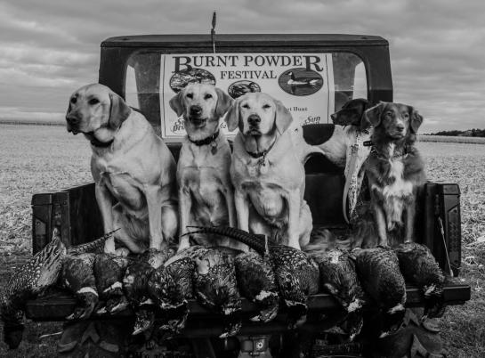 Dogs.  Gotta love 'em.