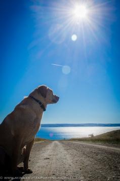 Mika looks over Lake Oahe