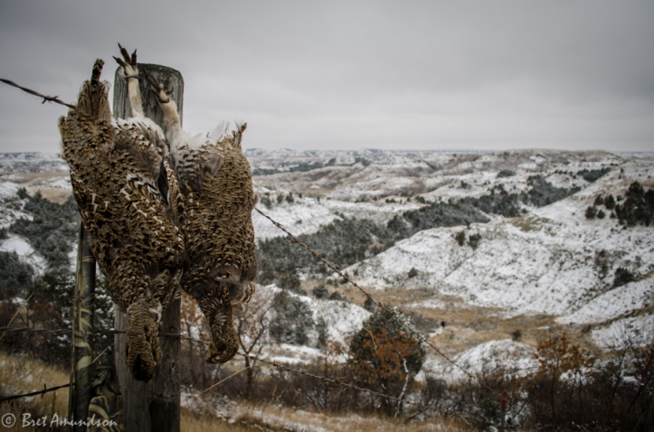 DAKOTA REPORT: A couple of sharp tail grouse harvested in the Badlands of western North Dakota.