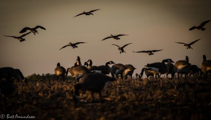 10813 - whc goose hunt stuff-3