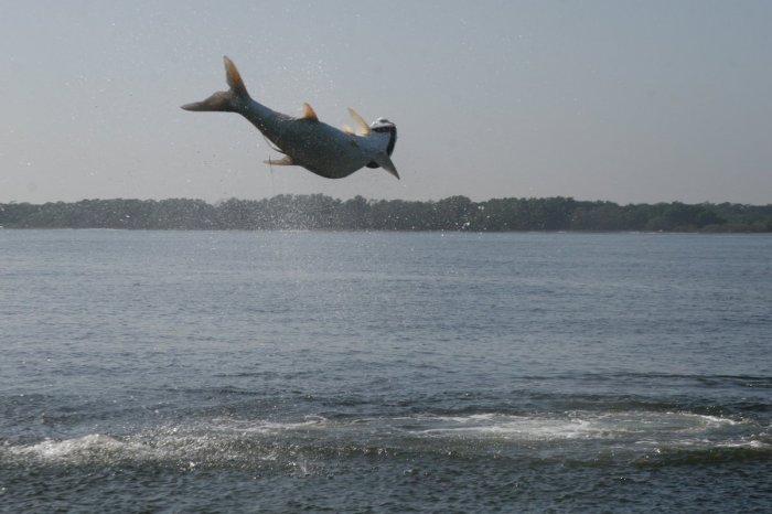 fish jump 2