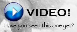 Winchester SXP Shotgun Recall –Video