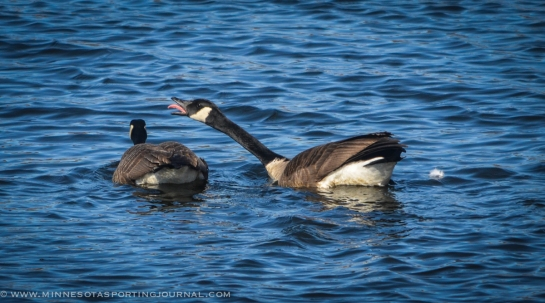 to a waterfowl essay Essays on thanatopsis the thanatopsis is one of the most popular assignments among students' documents if you are stuck with writing or missing ideas, scroll down and find inspiration in the best samples.