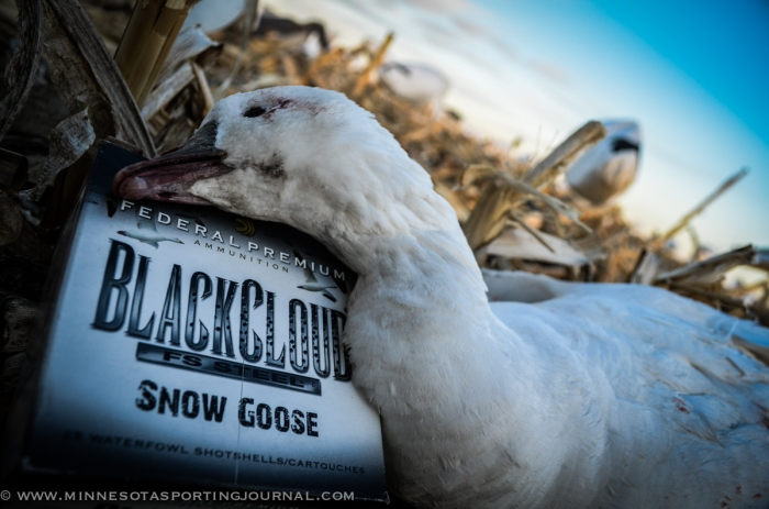 31614 - snow goose hunt sd-14