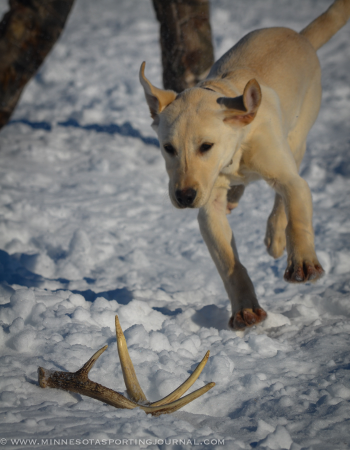 3814 - deer classic - day 2c-41
