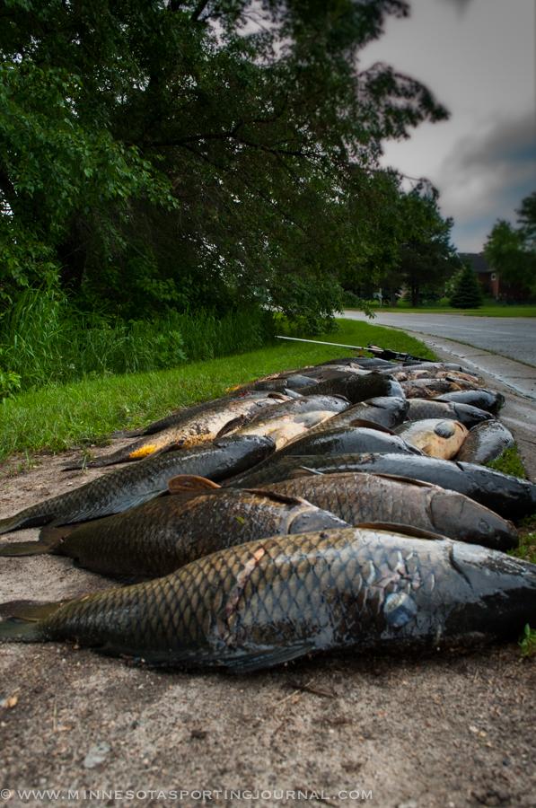 61114 - turtle bowfishing curt wells-24