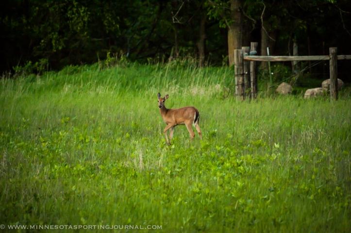 6214 - deer buck-10