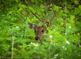 Hunter Pleads Guilty to Deer Poaching in Sherburne National WildlifeRefuge
