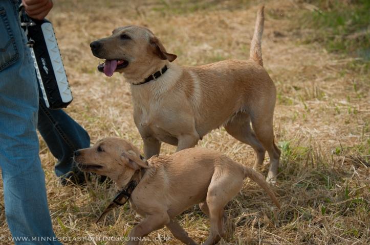 8214 - kf dogs-16