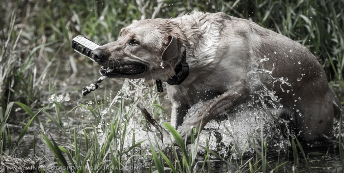 8214 - kf dogs-19