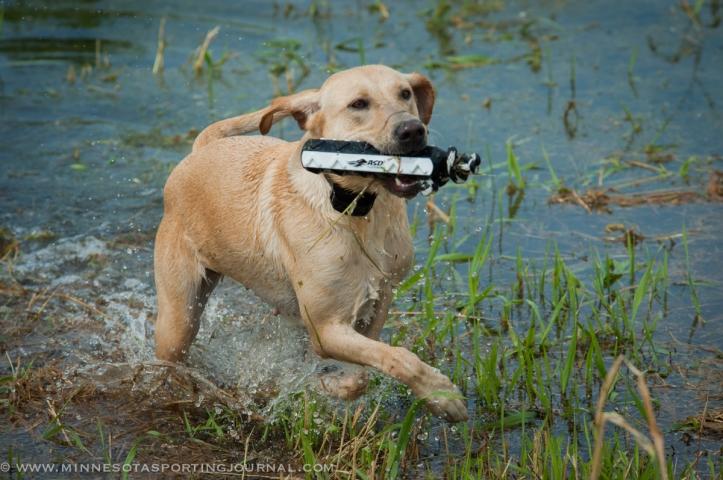 8214 - kf dogs-27
