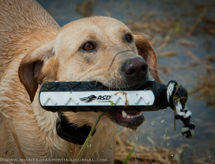 8214 - kf dogs-28