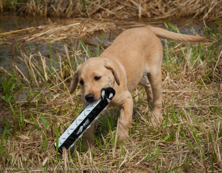 8214 - kf dogs-3