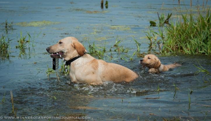 8214 - kf dogs-37