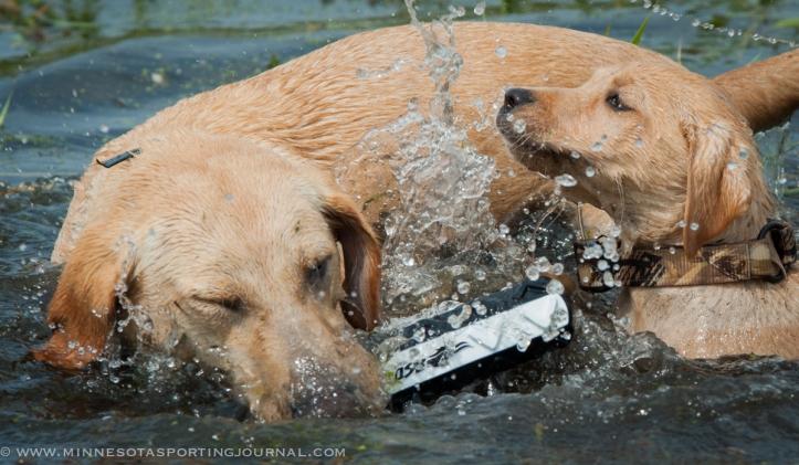 8214 - kf dogs-38