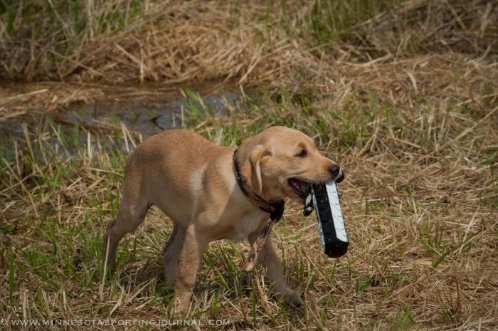 8214 - kf dogs-4