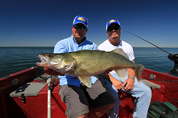 The author Jason Mitchell and friend Ken Schmidt with a massive Fort Peck walleye.  Repetition is a top strategy to trip the trigger of late summer walleye