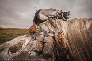 A drake redhead was part of a morning harvest that was scouted using Maven binoculars