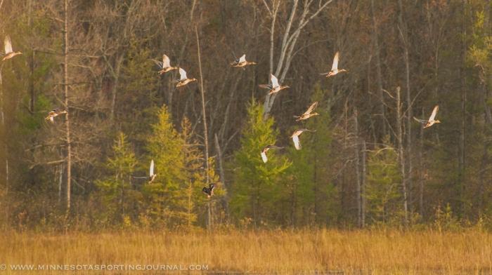 10314 - duck hunt-2