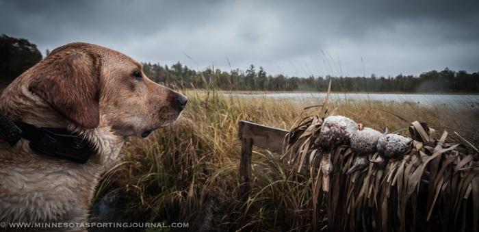 10314 - duck hunt-7