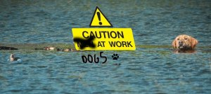 Caution-dogs-at-work