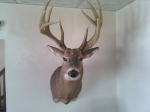 The Minnesota Moose is already on the wall