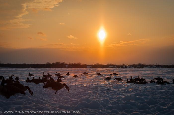 111614- geese decoys sunset