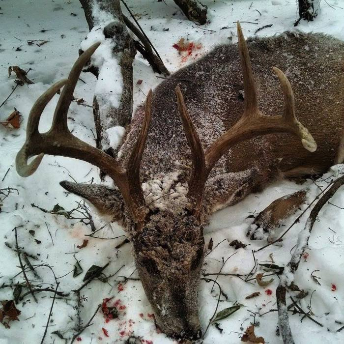 Eric Tomoson's big buck from western Minnesota