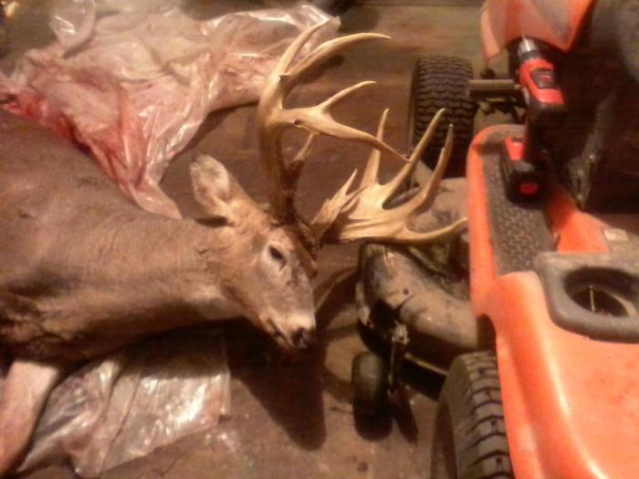 Luke Onstad's giant from Houston County
