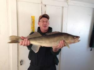 Walleye, Ice Fishing, 2-5-15, Lake of the Woods MN