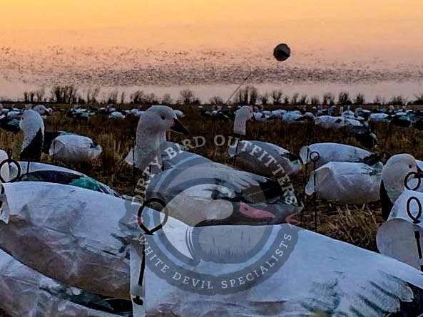 dirty bird outfitters pic