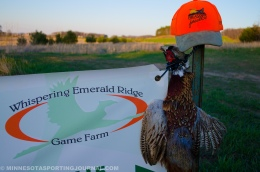 Springtime Roosters: A Chance to Volunteer with PheasantsForever