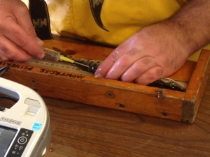 An electronic tag being inserted in a muskie in Montrose