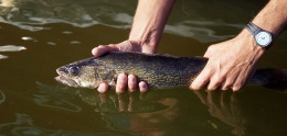 FROM THE DNR: Special Fishing Regulations Released